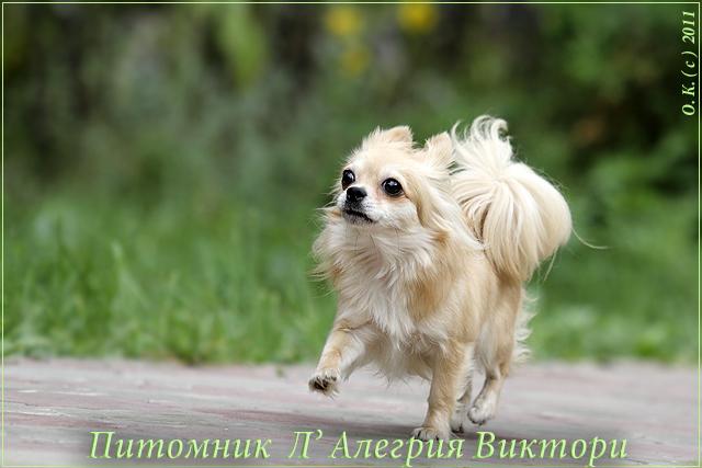 ЭЛЛИ ШЕР КЛЕР