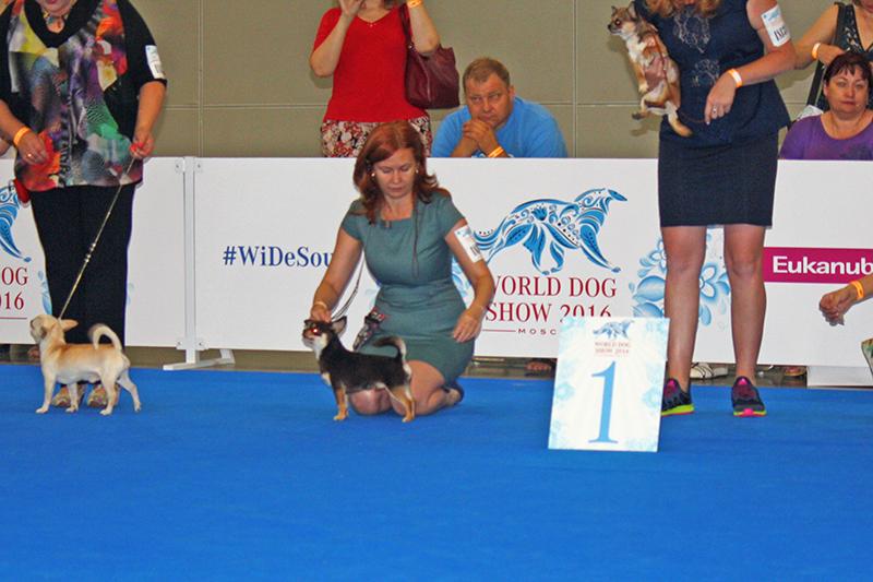 Чемпионат Мира собак 2016