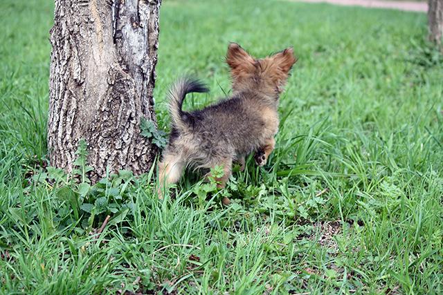Прогулка щенков весна-лето
