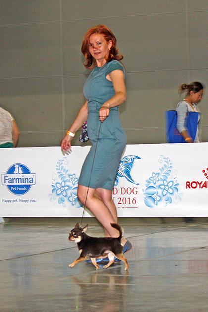 Чемпионат мира выставка собак 2016